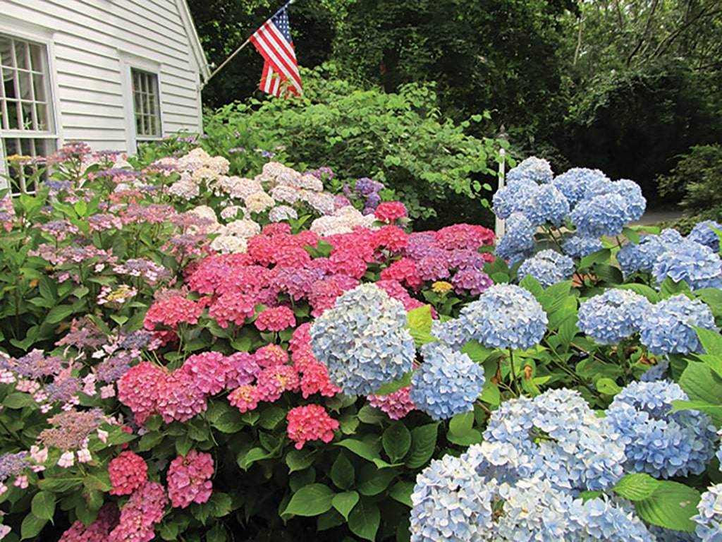 This is going to be a colorful celebration | Cape Cod HOME Summer 2016