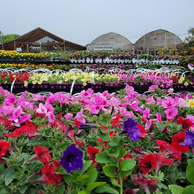 Hyannis-Country-Gardens