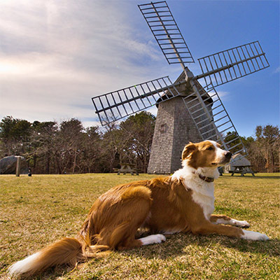 Dog by windmill at Drummer Boy Park